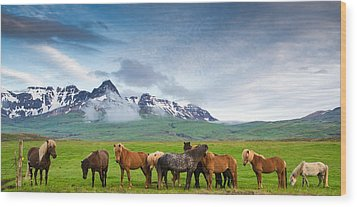 Icelandic Horses In Mountain Landscape In Iceland Wood Print