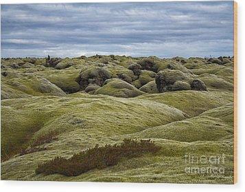 Icelandic Moss Wood Print by Miso Jovicic