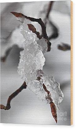 Icy Elegance Wood Print by Elena Elisseeva