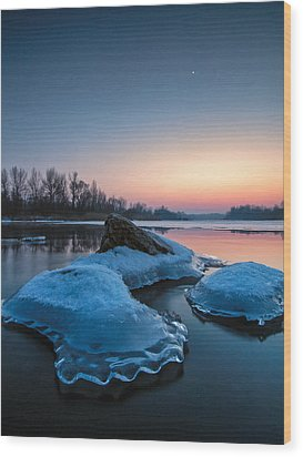 Icy Jellyfish Wood Print by Davorin Mance