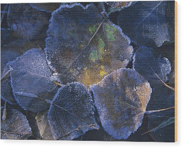 Icy Leaves Wood Print