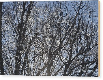 Icy Trees  Wood Print by Luther   Fine Art