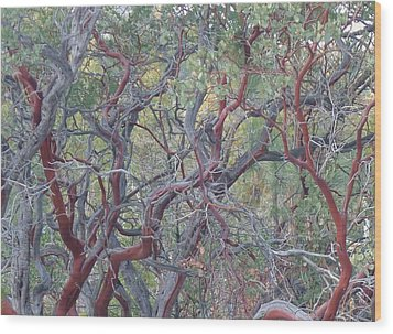 Wood Print featuring the photograph Idyllwild Red Tree by Nora Boghossian