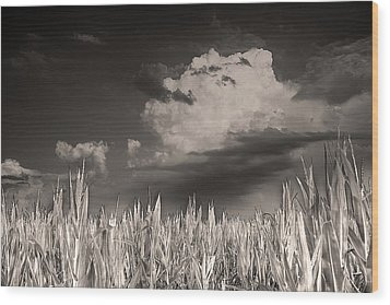 If You Build It He Will Come Wood Print by William Fields