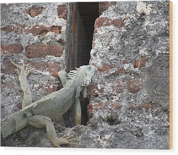 Wood Print featuring the photograph Iguana by David S Reynolds