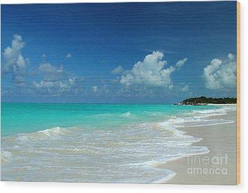 Iguana Island Caribbean Wood Print