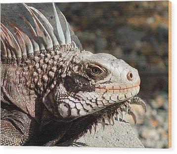 Iguana Wood Print by Jodi Terracina