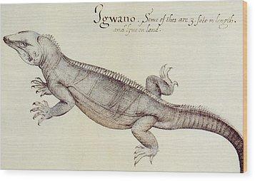 Iguana Wood Print by John White