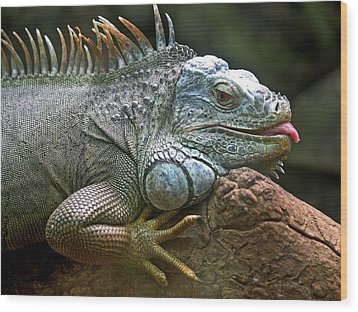 Iguana Lizard Wood Print by Tilen Hrovatic