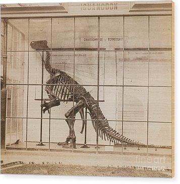 Iguanodon Skeleton Mesozoic Dinosaur Wood Print by Science Source
