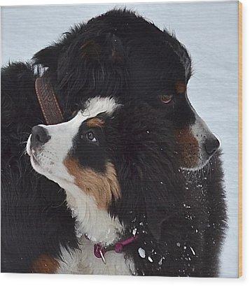 I'll Keep You Warm Wood Print by Barbara Dudley
