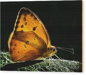 Illuminated Butterfly Wood Print by Alice Cahill