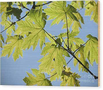 Illuminated Leaves Wood Print by Gayle Swigart