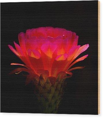 Illumination Wood Print by Rick Furmanek