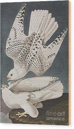 Illustration From Birds Of America Wood Print by John James Audubon