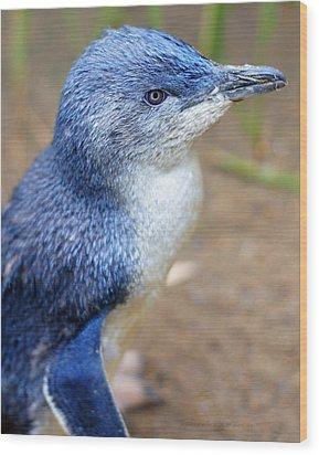 I'm Blue - Penguin Wood Print by DerekTXFactor Creative