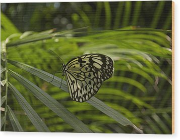 Wood Print featuring the photograph I'm Ready For My Closeup by Sandy Molinaro