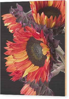 Imagination - Sunflower 01 Wood Print