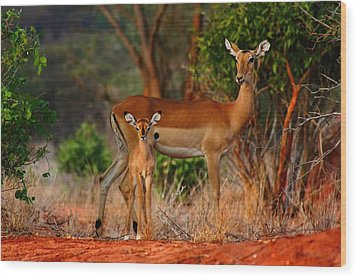 Impala And Young Wood Print
