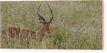Wood Print featuring the photograph Impala Camo by Joseph G Holland