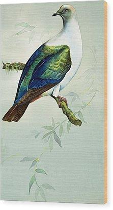 Imperial Fruit Pigeon Wood Print by Bert Illoss