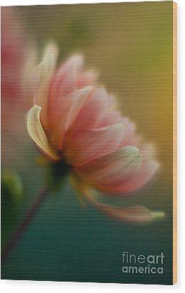 Impressionist Dahlia Wood Print by Mike Reid