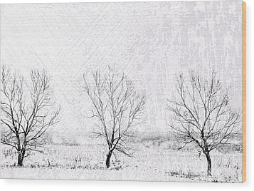 In A Line. Winter Trees Wood Print by Jenny Rainbow