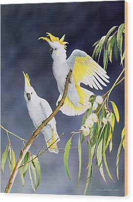 In A Shaft Of Sunlight - Sulphur-crested Cockatoos Wood Print by Frances McMahon