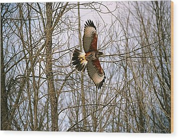 Wood Print featuring the photograph In Flight by David Porteus