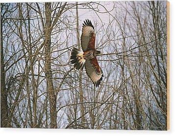 In Flight Wood Print by David Porteus