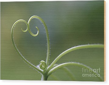 In Love With Nature Wood Print by Maria Ismanah Schulze-Vorberg