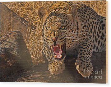 In No Uncertain Terms Wood Print by Ashley Vincent