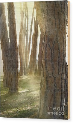In Pine Forest Wood Print by Mythja  Photography