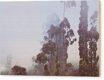 In The Blue Silence. Nuwara Eliya Wood Print by Jenny Rainbow