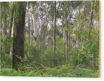 In The Bush Wood Print by Evelyn Tambour