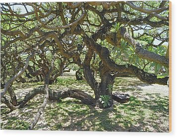 In The Depth Of Enchanting Forest I Wood Print by Jenny Rainbow