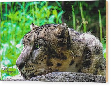 Wood Print featuring the photograph In The Eye Of A Leopard by Glenn Feron