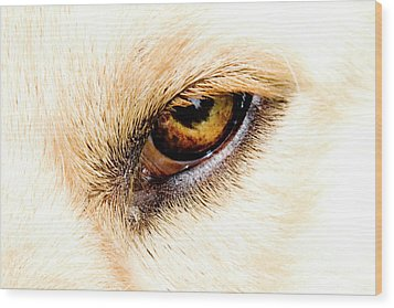 Wood Print featuring the photograph In The Eyes.... by Rod Wiens