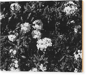 Wood Print featuring the photograph In The Garden- Black And White by Alohi Fujimoto