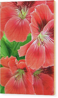 In The Garden. Geranium Wood Print by Ben and Raisa Gertsberg
