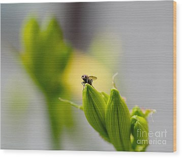 In The Garden - The Champ Wood Print