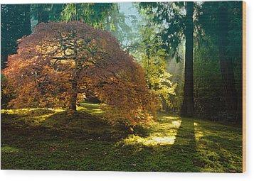 In The Gentle Autumn Light Wood Print by Don Schwartz