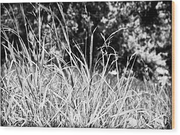 In The Grass Wood Print by Andrew Raby