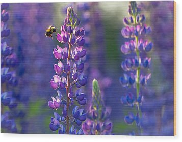 In The Land Of Lupine Wood Print