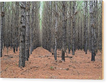 In The Pines Wood Print by Bob Jackson
