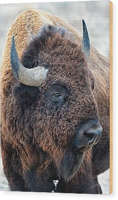 In The Presence Of  Bison - Yes Paint Him Wood Print