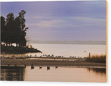 In The Quiet Morning Wood Print by Bill Cannon
