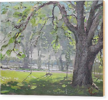 In The Shade Of The Big Tree Wood Print by Ylli Haruni