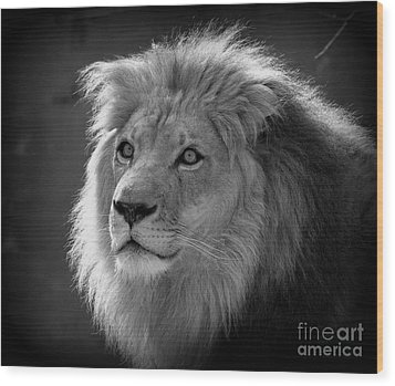 Wood Print featuring the photograph In The Shadows #2 by Lisa L Silva