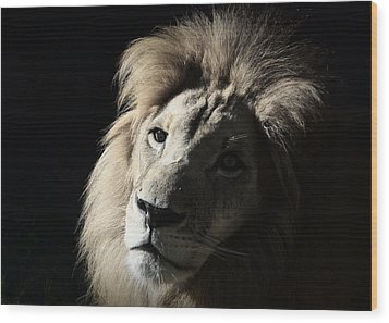 Wood Print featuring the photograph In The Shadows by Lisa L Silva